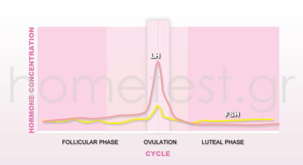 10 digital ovulation tests + 2 digital HomeTest pregnancy tests